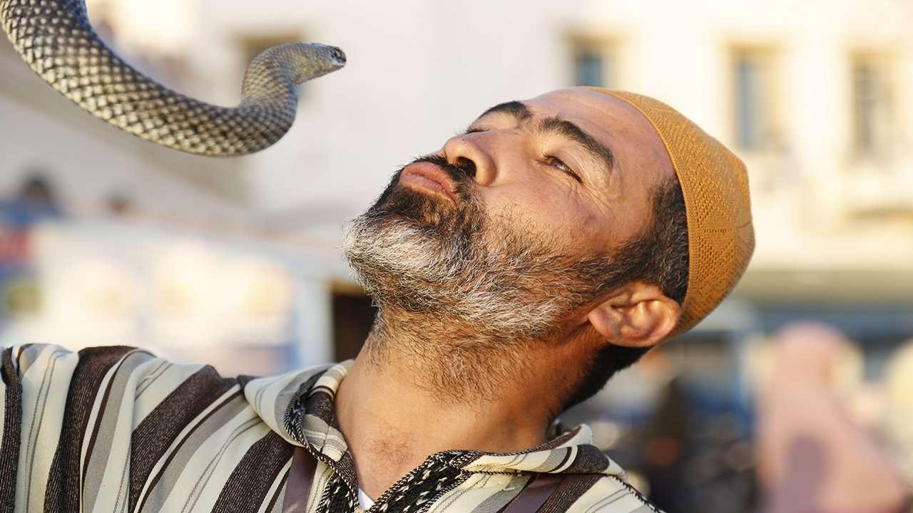 """مروض الثعابين بالمغرب .. لقبه """"عيساوي"""" ومهمته البحث عن لقمة عيش مغموسة بالسم"""