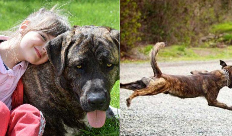 حاول رجل اختطاف هذه الفتاة الصغيرة لكن كلبها كان له بالمرصاد!