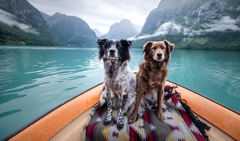 يعيش هذين الكلبين الحياة التي يحلم بها أي شخص (سفر، صور، متعة.. )